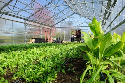 Organic waste from the Rist Urban Agriculture Greenhouse on East Campus will be sent to a new composting site run by Mill City Grows, which received a $10,000 Lowell Green Community Partnership grant.