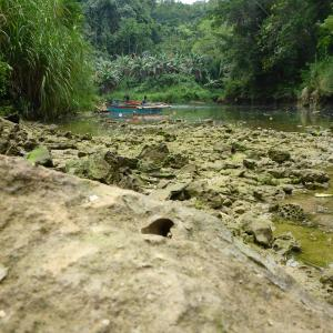 The Abatan River in the Philippines and its rocks bored by the shipworm. Photo credit: Marvin Altamia, Reuben Shipway