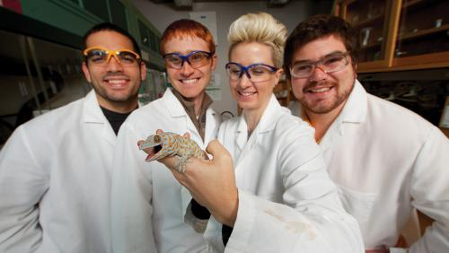 Four scientists smile at the camera while one holds up a gecko