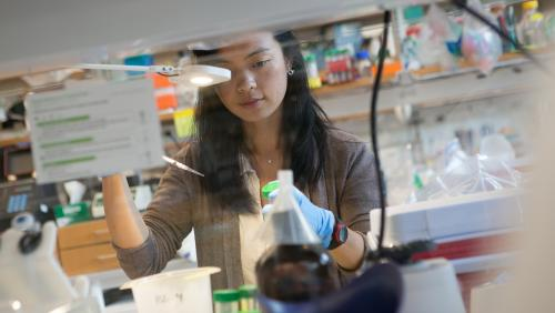 Researcher works in lab